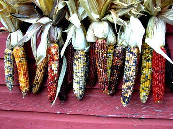 Corn2-1