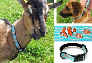 0590-dog-collar-leash-1_b