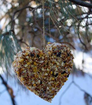 Heart_Birdfeeder