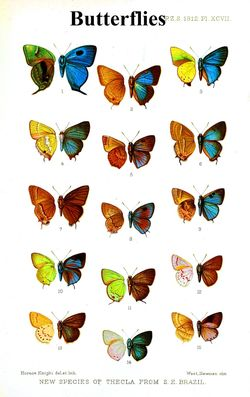 Animal-Insect-Butterfly-