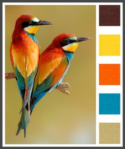 LizzyB_loves_color_palette_inspirations_11