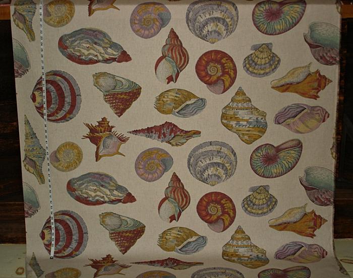 Shells-multi-o-755